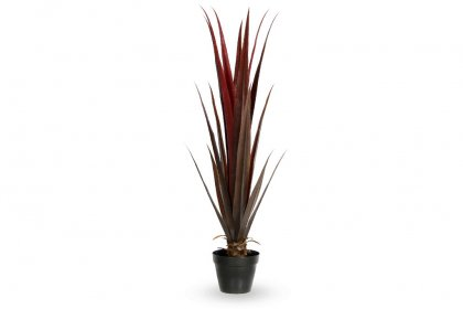 Red Agave